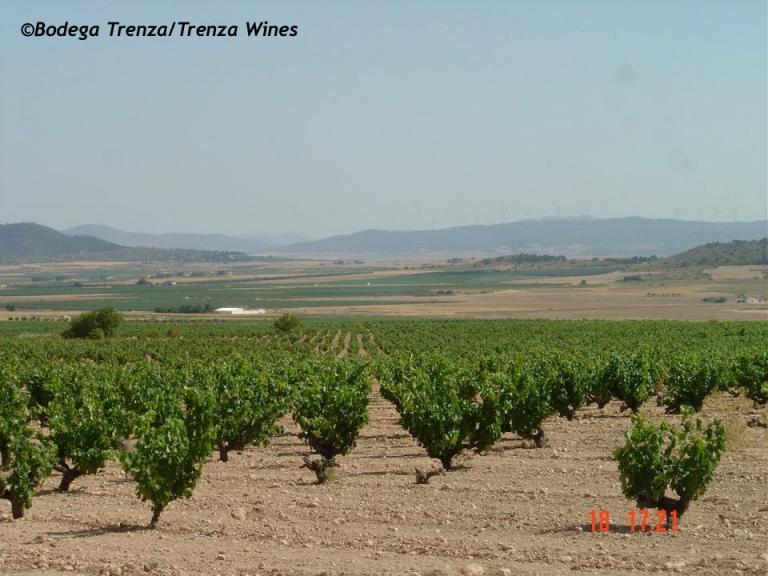 Trenza Wines Vineyards