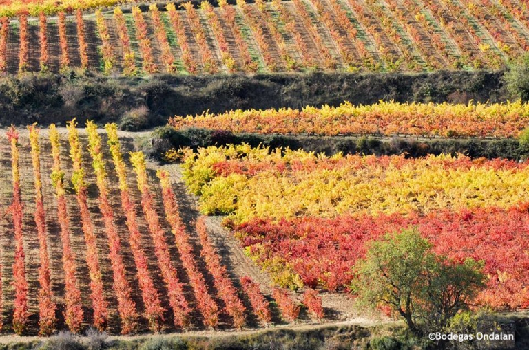 Vineyards from Ondalan in Autumn.
